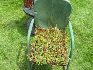 metal garden chair with succulents planted in seat