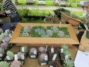 planters with small varieties of succulent plants