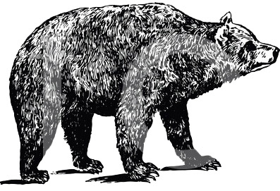 line drawing of bear