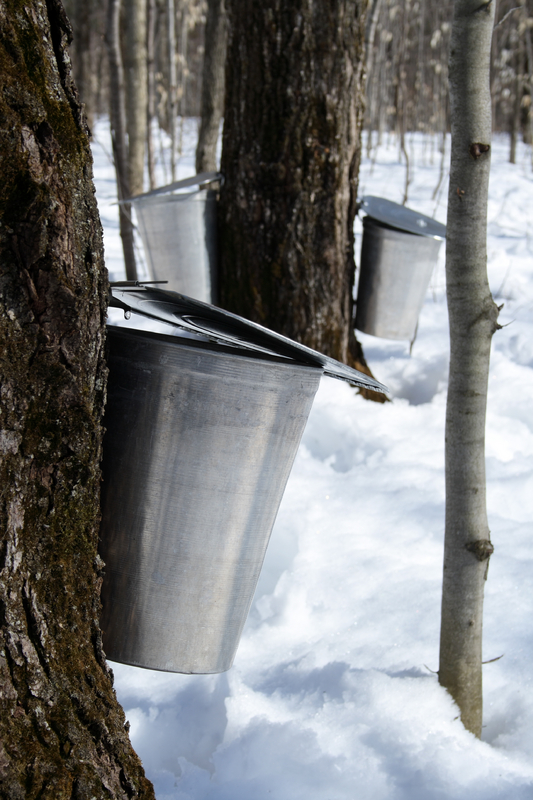 Syrup Buckets