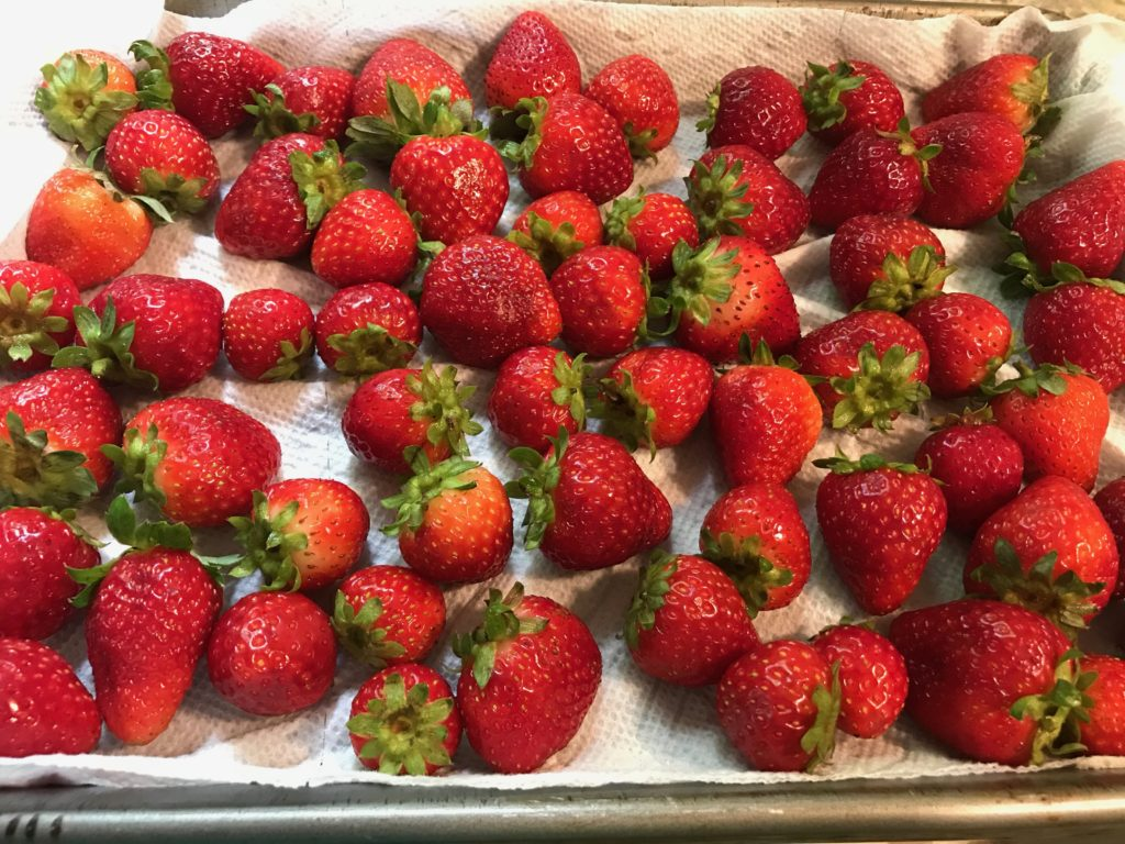 Fresh red strawberries spread out on a cookie sheet
