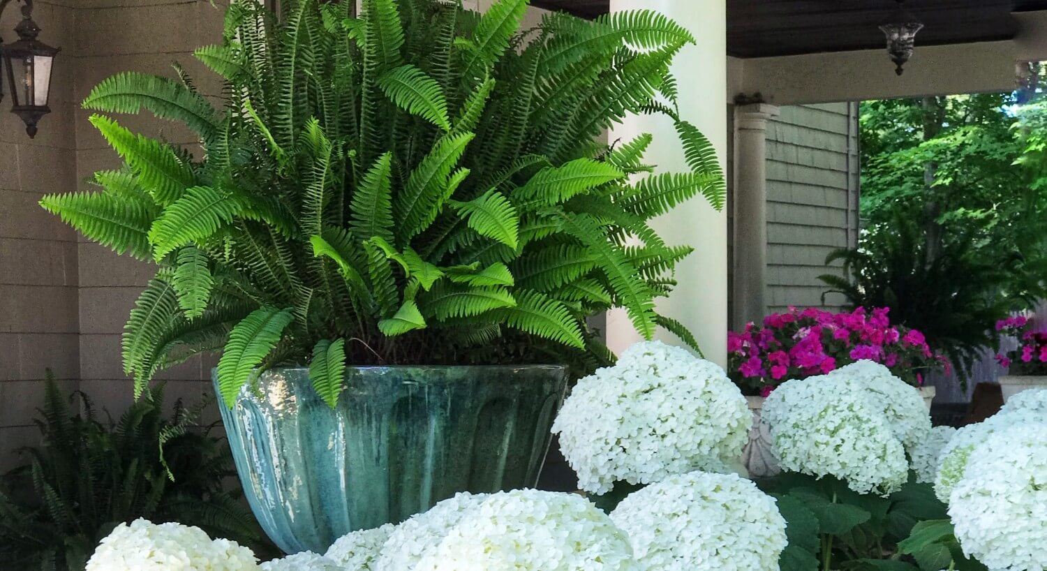 Large green fern in a teal vase next to lush white hydrangea flowers on a porch